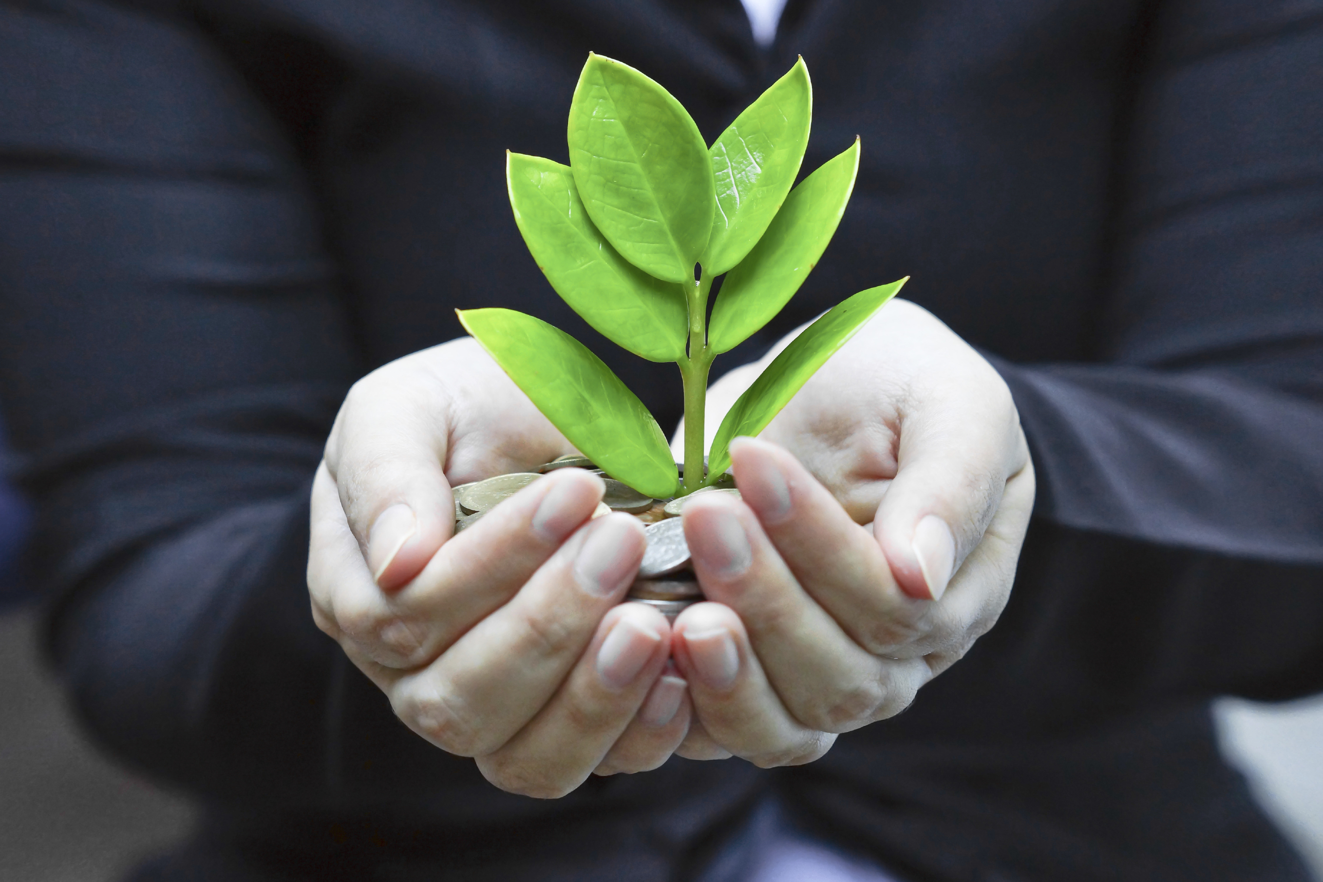 woman's hands holding small green plant